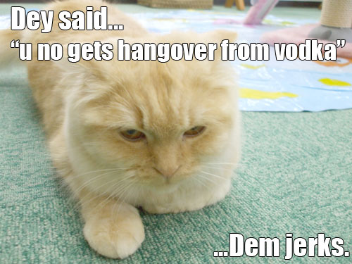lol cat vodka hangover