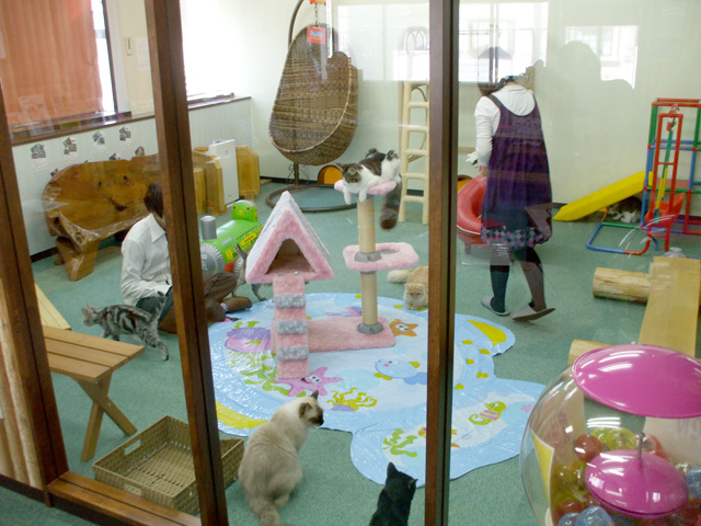 1000  images about Kat playroom on Pinterest | Cats, Furniture and ...