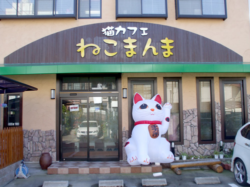 Cat Cafe In Little Tokyo