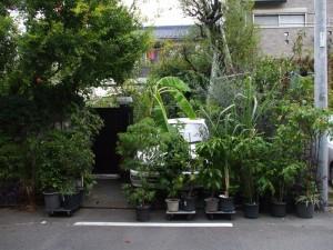 Japanese parking: camouflage