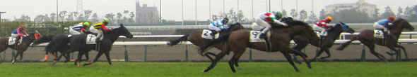 Going to a Horse Race in Japan (Keiba)